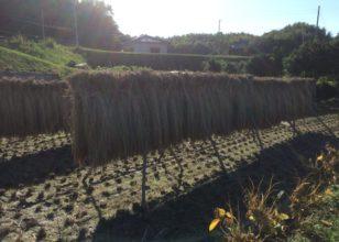 淡路島田舎農園